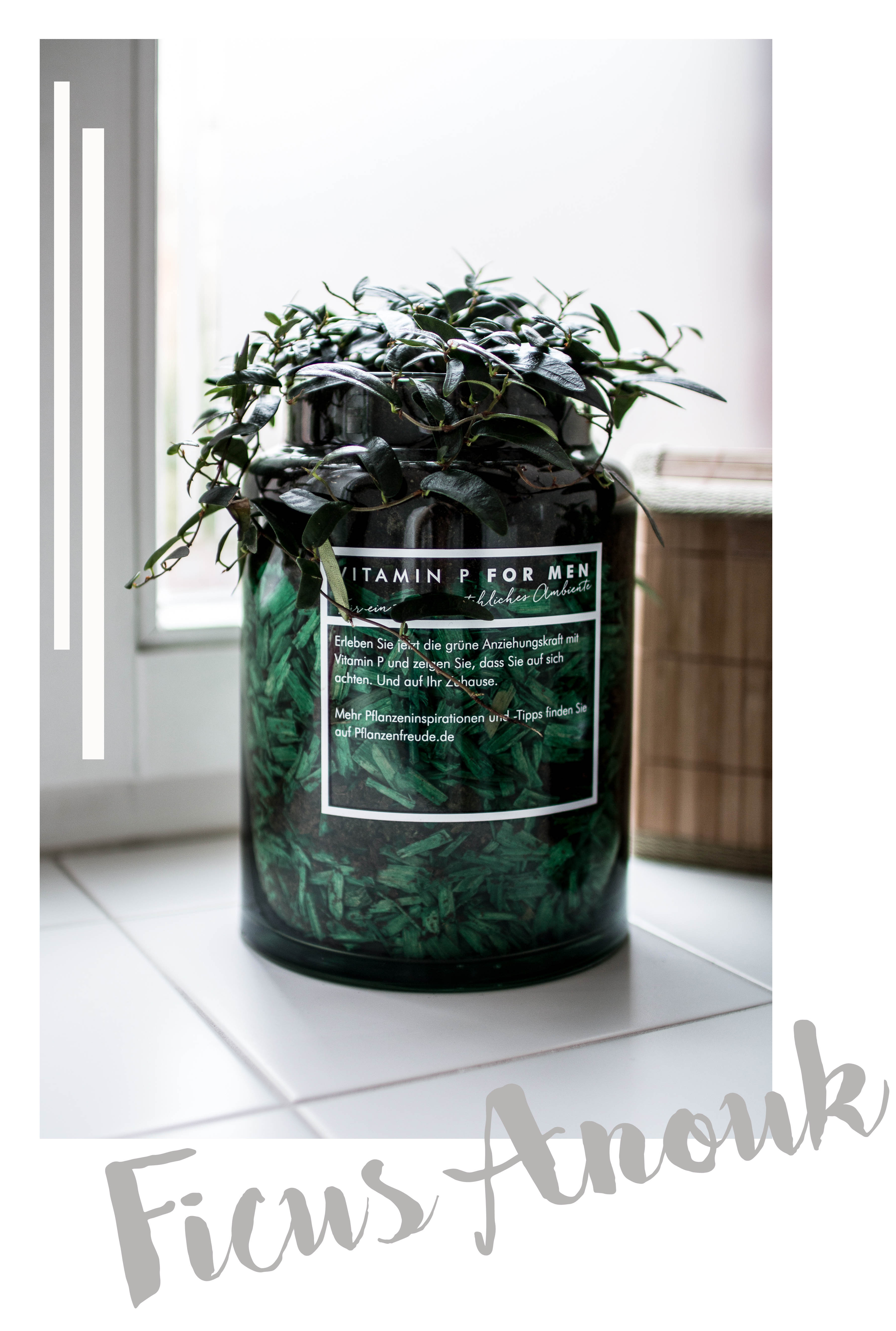 Pflanzen_Maenner_zukkermaedchen_Dekoration_Interieur