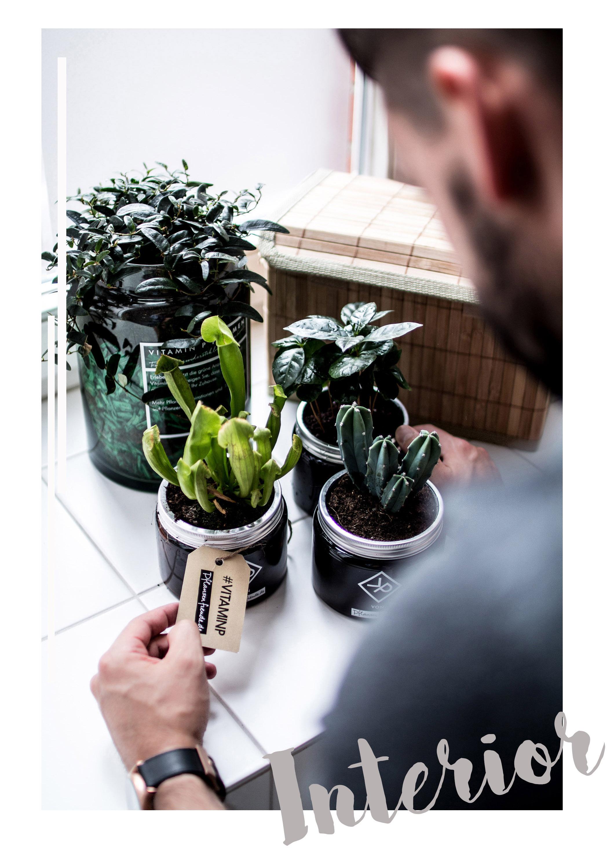 Pflanzenfreude.de_Blumen_Interior_zukkerme