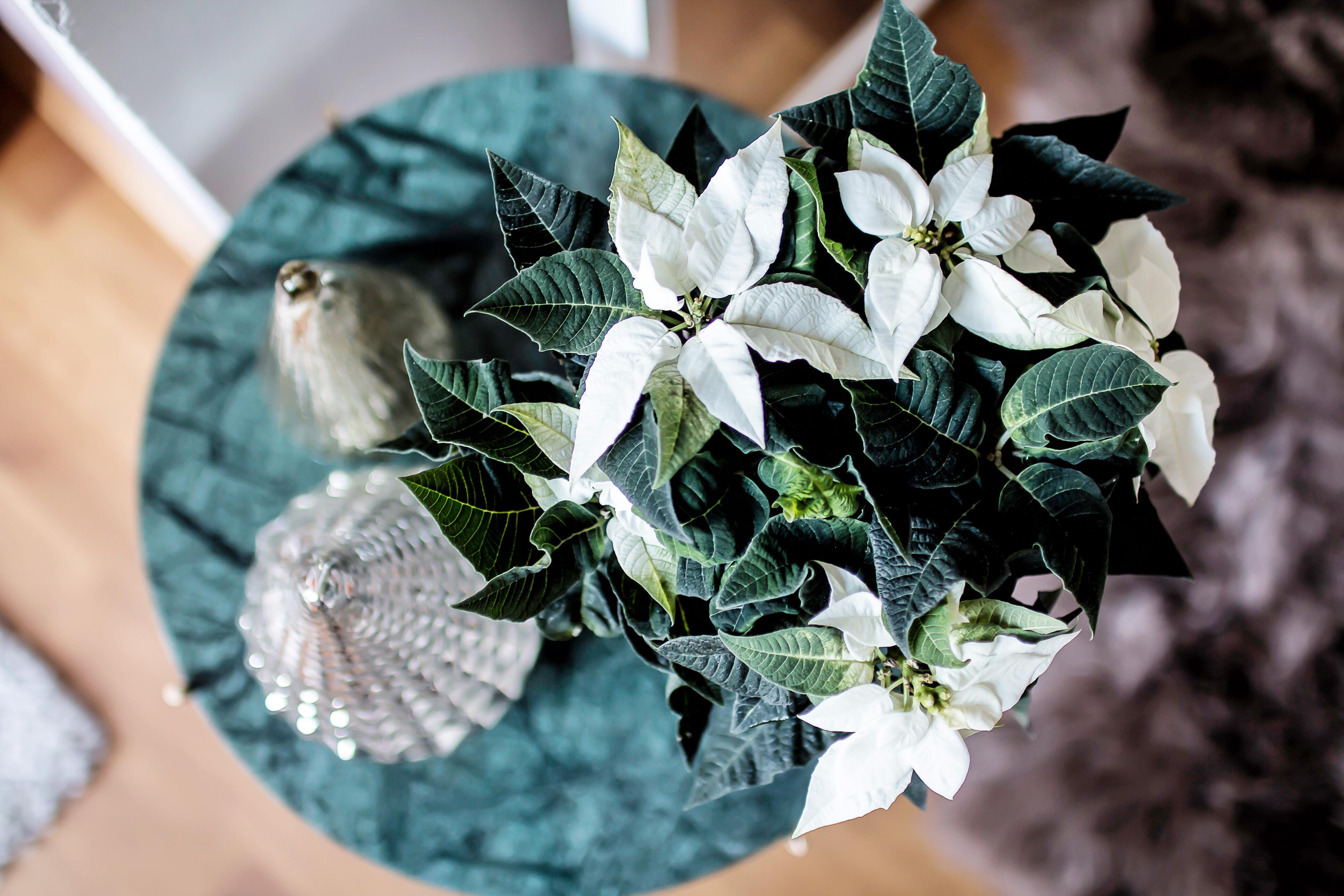 weihnachtsstern_dekoration_tchibo_gratis_preiswert_zukkerme
