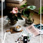 Pflanzentrend Water Plants. Pflegeleichte Zimmerpflanzen für das Büro oder zu Hause.