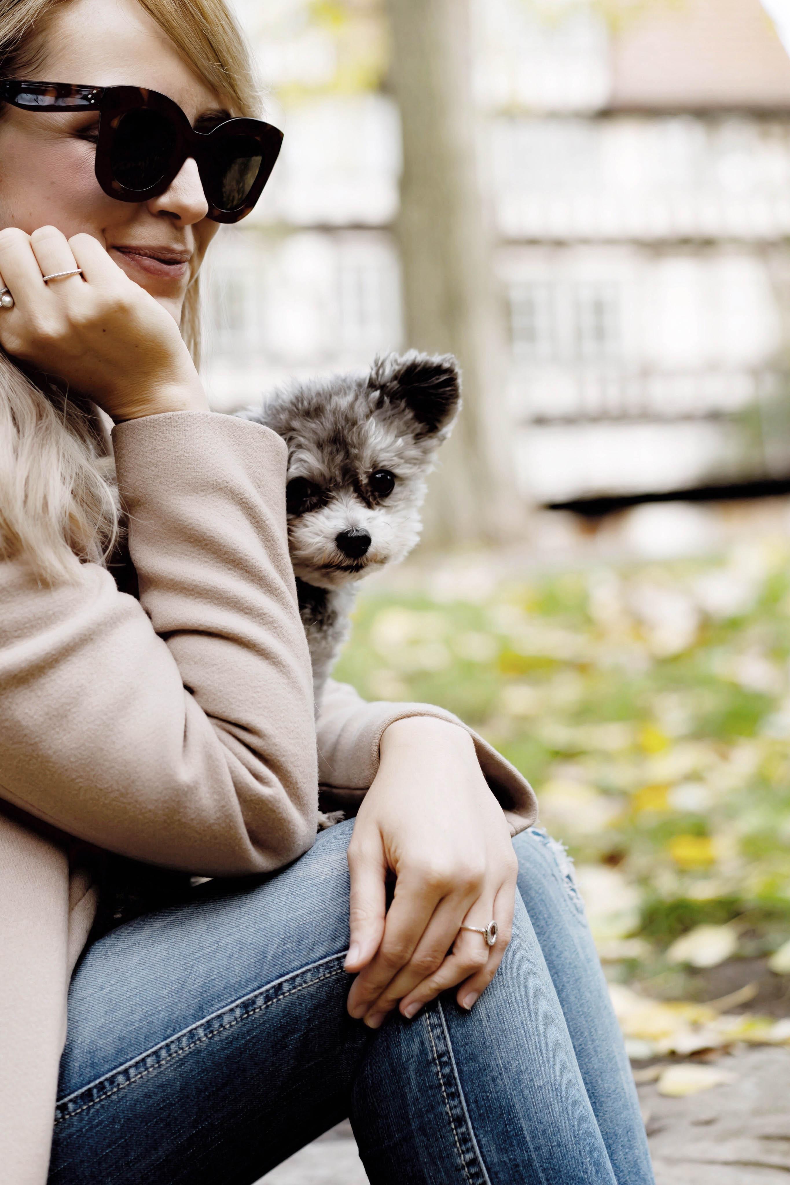 Dog Content: Leben mit einem Stadthund