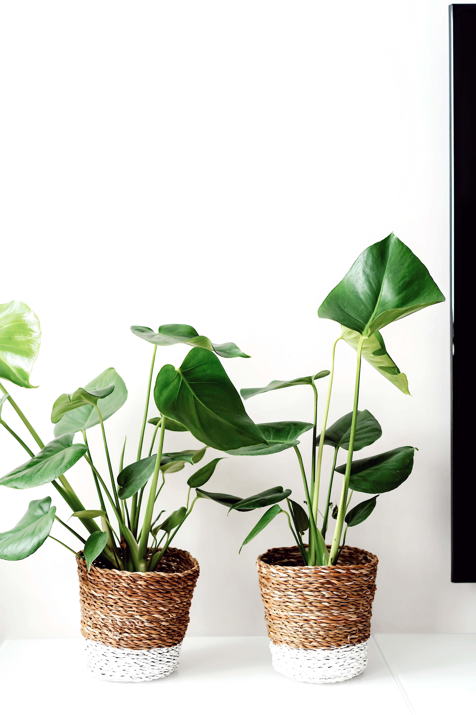 Into the Jungle: Die schönsten Zimmerpflanzen der Saison