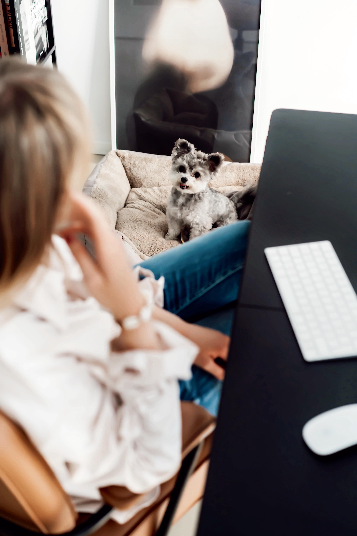Hund mit auf Arbeit nehmen für ein besseres Klima