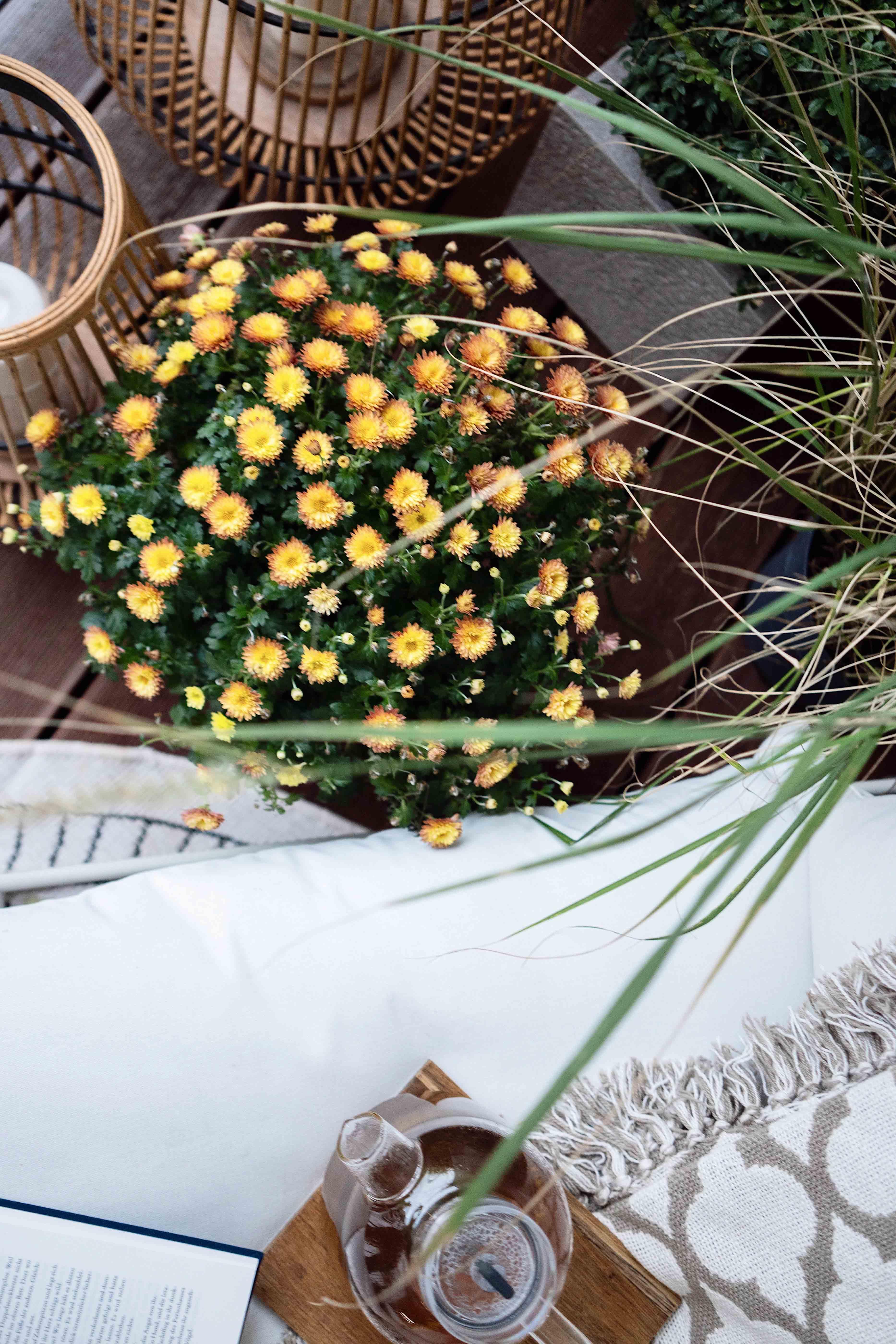 Chrysanthemen auf dem Balkon
