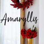 Die Weihnachtsblume 2019: Die Amaryllis