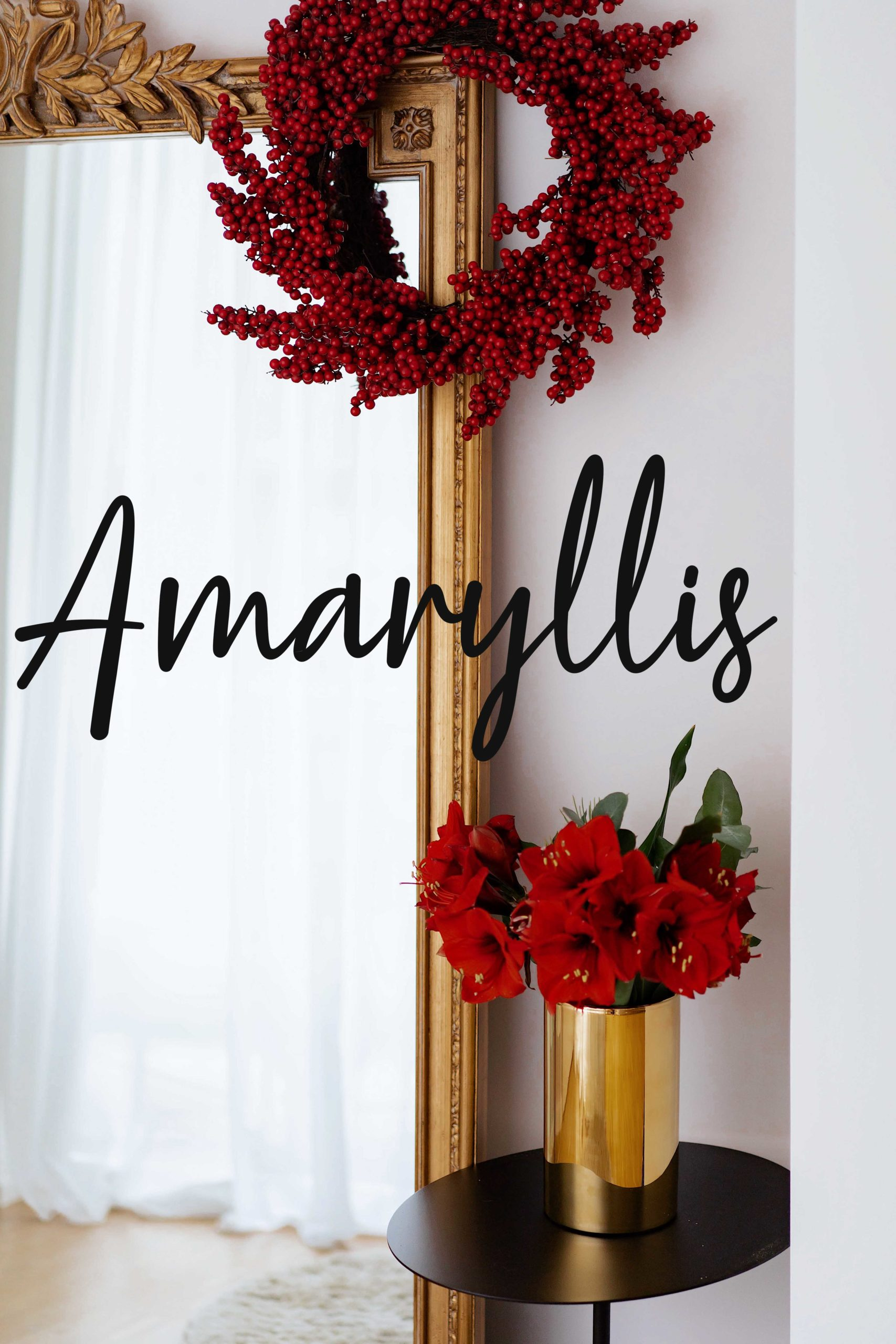 Blume2000de online Amaryllis shoppen