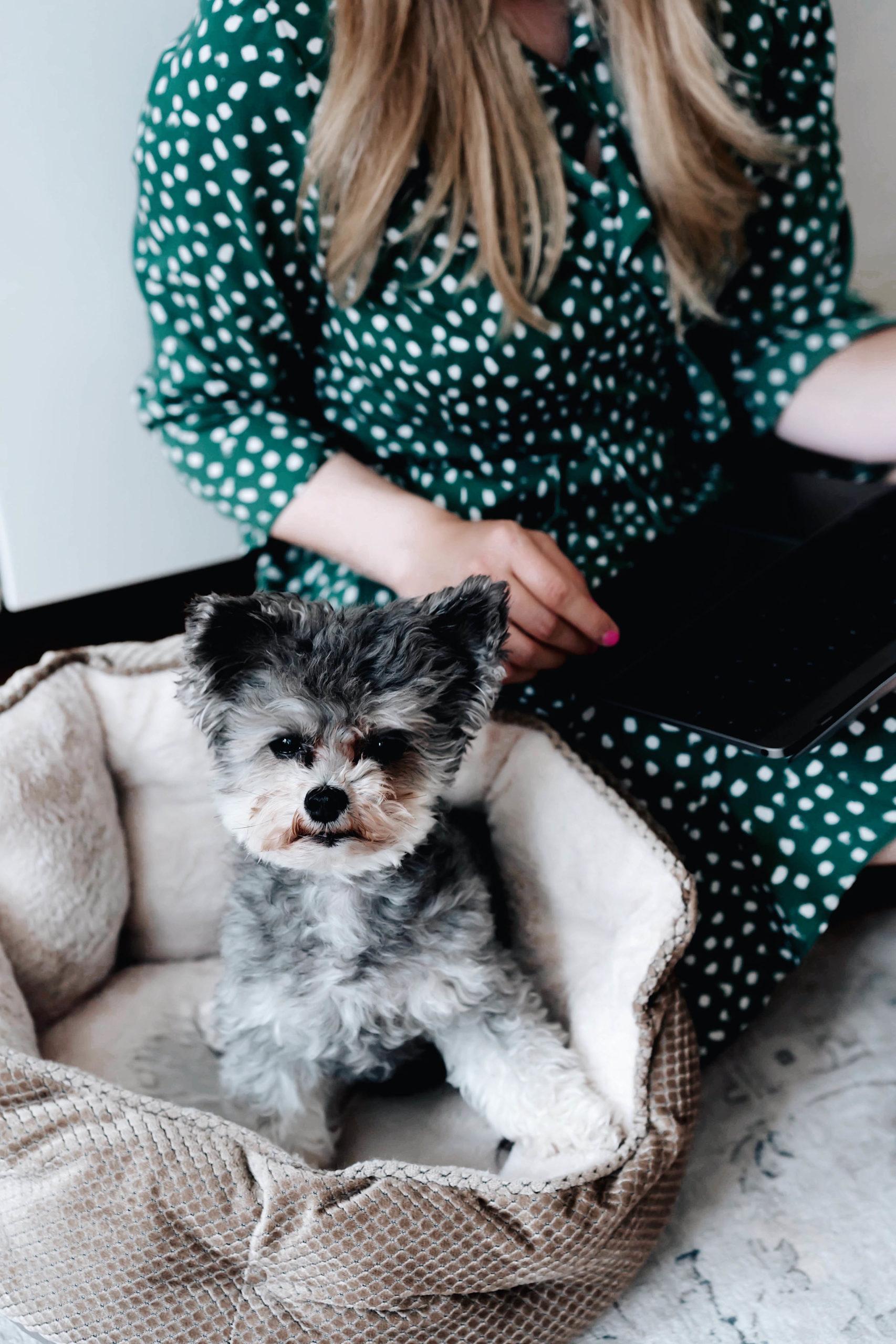 Pets at work: Es ist Nimm deinen Hund mit zur Arbeit Tag